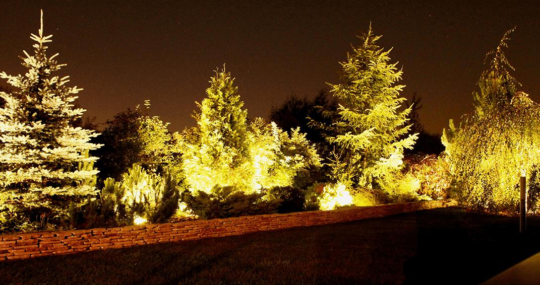 Декоративная подсветка хвойных деревьев